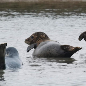 Seals In Water